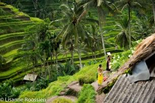 rijstvelden-met-toeristen-1