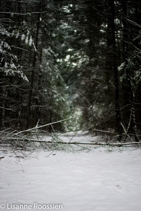 Winterfoto watermerk (1 van 1)